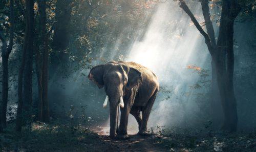 🐘 Commerce d'espèces sauvages l'UE se met à la page sur le contrôle 🇪🇺